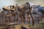 Der hat Biss: Das rekonstruierte Skelett eines Tyrannosaurus Rex in Pittsburgh